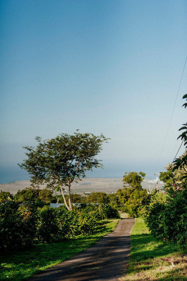 The Hula Daddy Kona Coffee farm sits in the hills of Holualoa with ocean views. The elevation provides the prefered climate for the coffee trees.