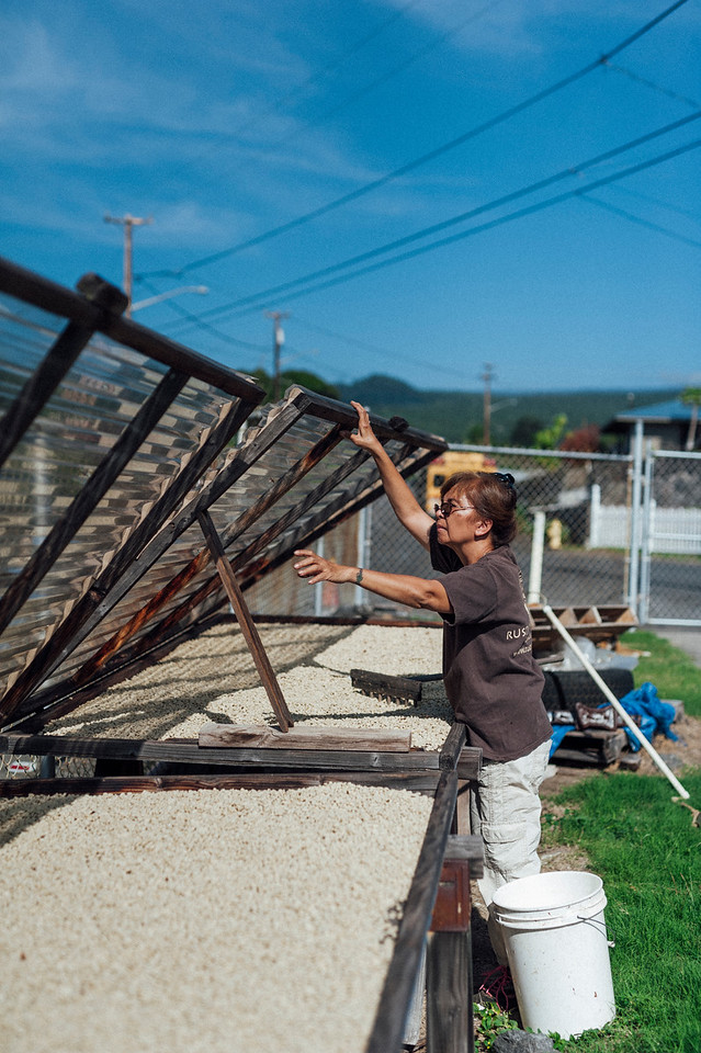 Lorie Obra raises the drying racks outside of the Ka'u home on the Big Island of Hawaii. Rusty's Hawaiian Coffee is a handmade product from picking to processing.