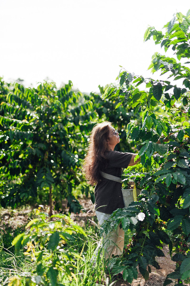 Lorie Obra hand picks coffee cherries on her Ka'u farm on the island of Hawai'i. Obra founded Rusty's Hawaiian Coffee with her late husband. The brand is known for natural processing.