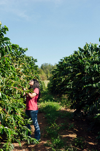 Joan Obra inspects coffee trees on her family's Ka'u coffee farm on the Big Island of Hawai'i. Rusty's Hawaiian Coffee is processed mostly by hand and dried in the sun.
