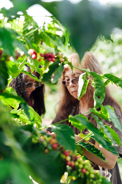 Joan Obra, left, and her mother, Lorie Obra, inspect coffee cherries on the trees at her family's Ka'u coffee farm. Rusty's Hawaiian Coffee is known for its natural processing.