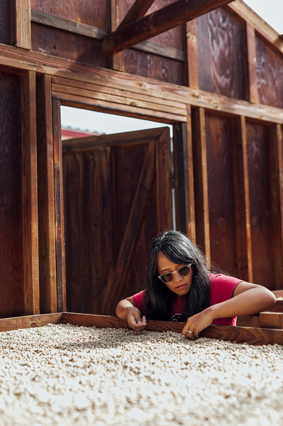 Joan Obra inspects parchment beans on the drying rack at her family's coffee farm. Rusty's Hawaiian Coffee is from the Ka'u district of the island of Hawai'i.