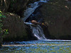 A waterfall at Onomea Bay (Photo credit: Jerry Leggett, ©2010, All rights reserved)
