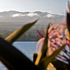 A view of Mauna Kea summit from Hilo Bay (Photo credit: Patsy Ferrell, ©2009, All rights reserved)