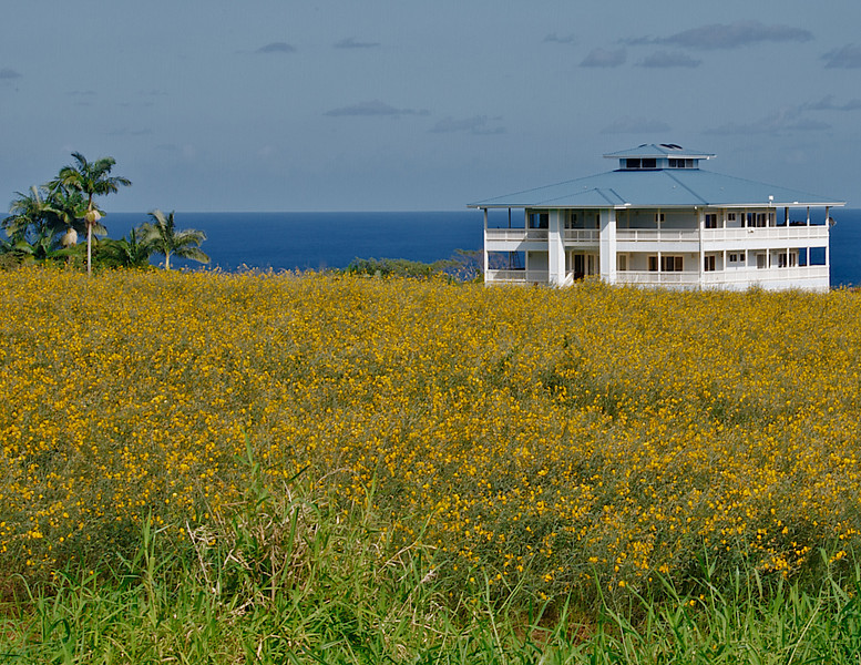 A home nestled along the Hamakua coast (Photo credit: Patsy Ferrell, ©2010, All rights reserved)