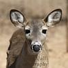Oh_Deer