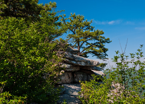 Pine Tree and Outcrop, Big Schloss Mountain, VA