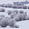 Frosty willows on Nevada Creek