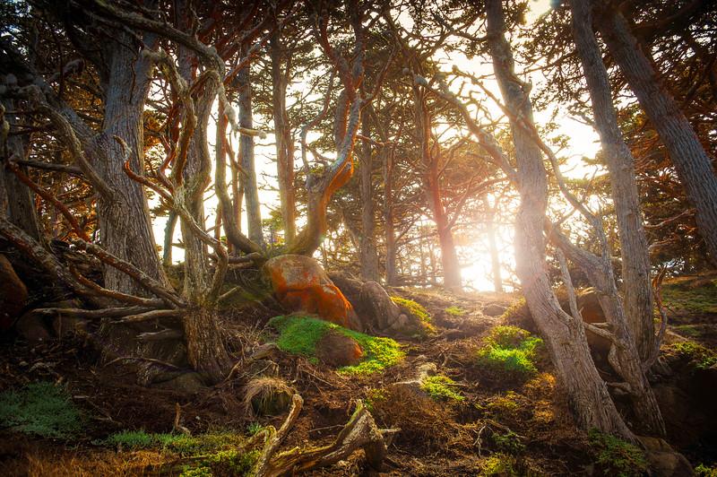 Mossy Point Lobos
