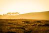 Golden Path Point Reyes