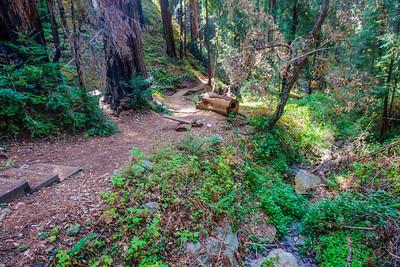 Julia Pfeiffer Burns State Park, California, USA