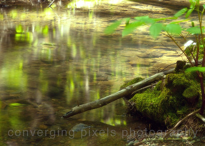 5391Muir Woods National Park