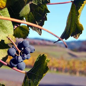 Roederer Winery  10/30/11 roedererwinery,jpg