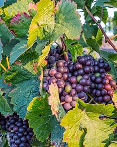 Jamieson Ranch Winery