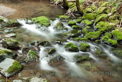 5829 Muir Woods National Park