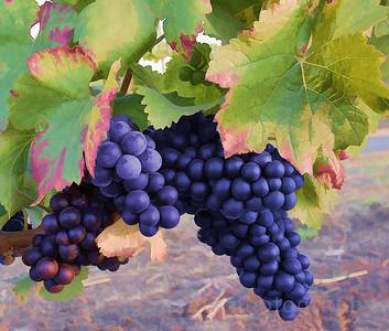 Jamieson Winery