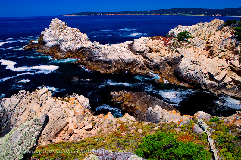 20110801_Point Lobos_1321