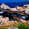 20110801_Point Lobos_1321
