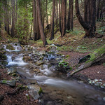 Big Sur Coastal Redwoods