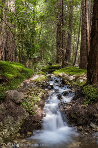 Burbling Brook, Big Sur, California