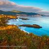 20110731_Point Lobos_1483