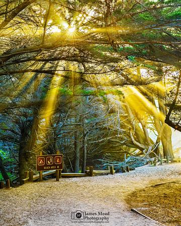 """""""Heaven through the Trees,"""" Pfeiffer Beach, Big Sur, California"""