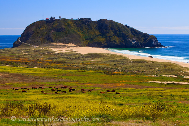 20110801_CA Central Coast_1349