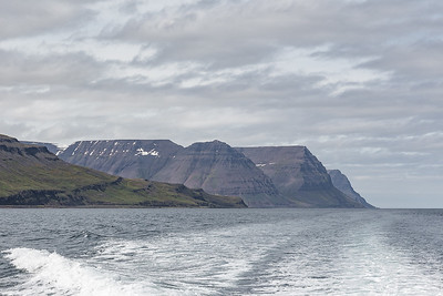 Vigur Island Tour