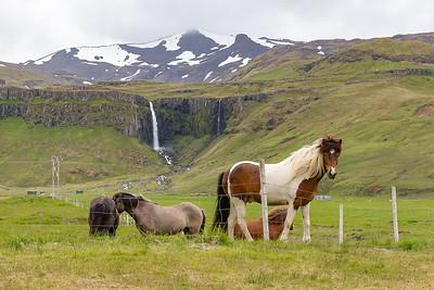 Grundarfoss - Icelandic Horses