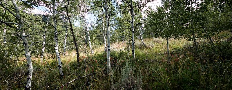 Hyndman Creek Trail Landscape