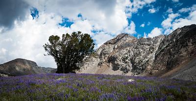 McIntire Peak in Big Basin with Lupine