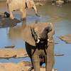 African Elephant with baby at water hole