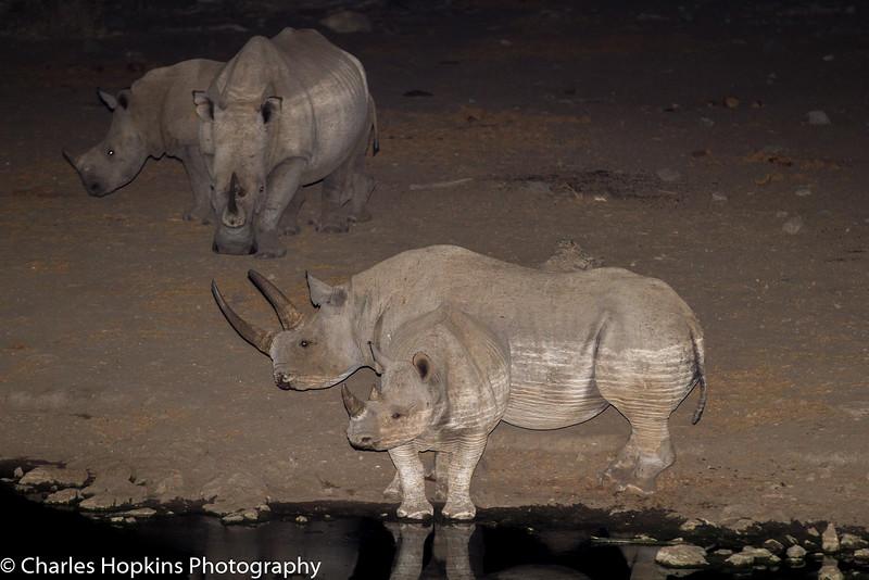 White Rhinoceros , and Black Rhinoceros