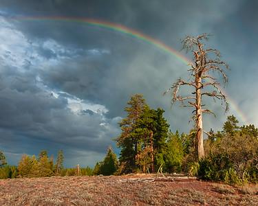Rainbow witness