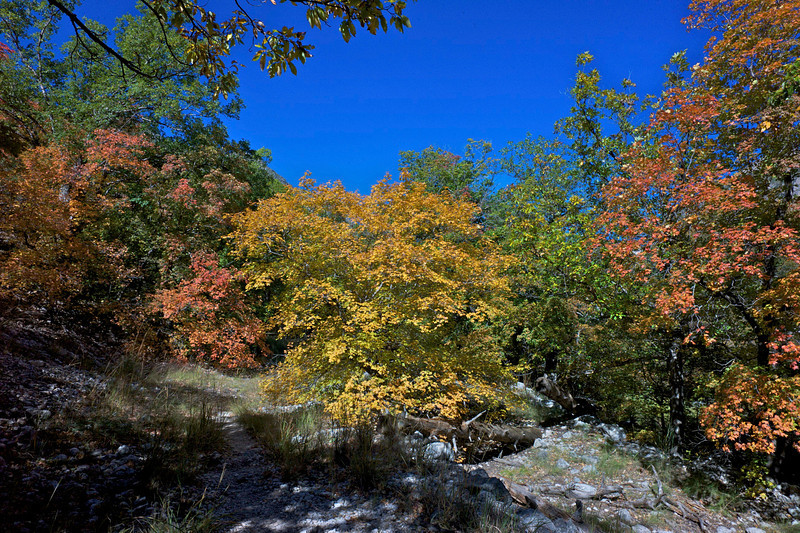 McKittrick Canyon<br /> Guadalupe Mountains National Park<br /> Texas     <br /> October 2010