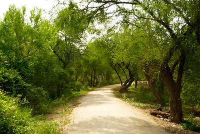 Cool shaded path to the Rio Grande