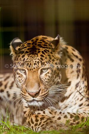 bigcats052