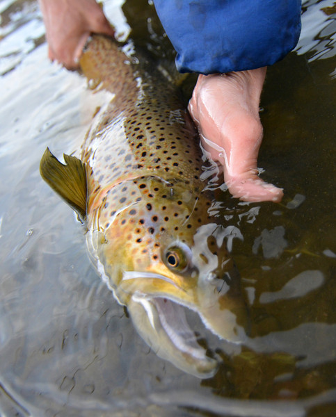 Brian Sienkowski releases a nice brown... photo: James Anderson