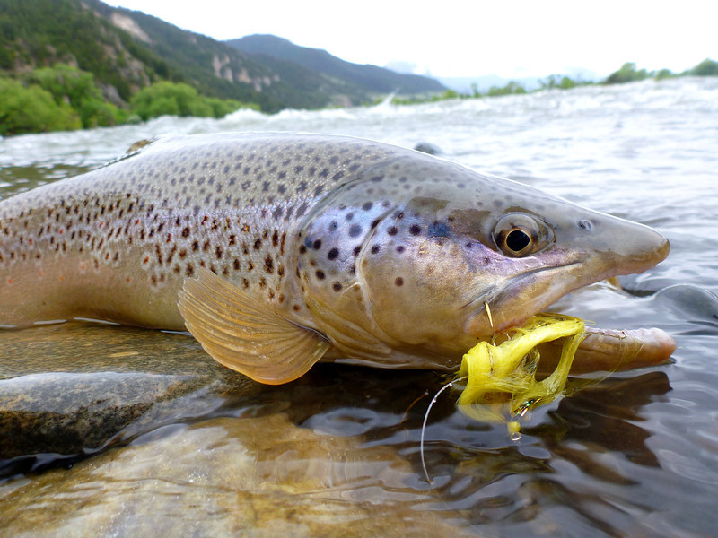 19 inch brown, YR... Photo: James Anderson