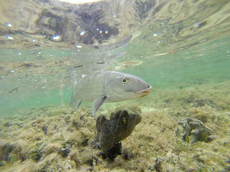 Underwater bone... Photo: George Anderson