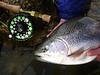 Sun fish / rainbow hybrid...nice slab Robbie!  Photo: James Anderson