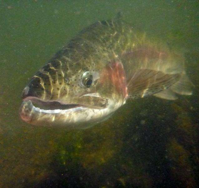 Underwater Montana bow...  Photo: James Anderson