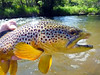 Creek brown... leadeye gets 'em every time... Photo: James Anderson