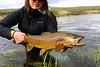 Alaina Donovan, 23 inch brown. . .  Photo: John Michunovich