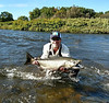 Chase Chapman with a Salmon River King at the DSR...