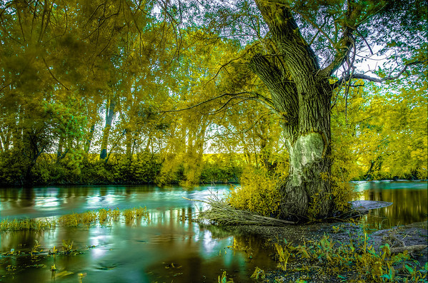 The Tree Down By the River