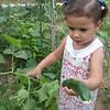Bu da taze salatalik, bu bahce isi guzelmis, kendi sebzeni kendin yetistiriyorsun...