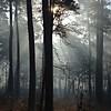 Sam Houston National Forest: Morning