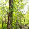 A Woodland Spring