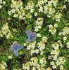Flowers and butterflies. Taken by Shannon. Great!